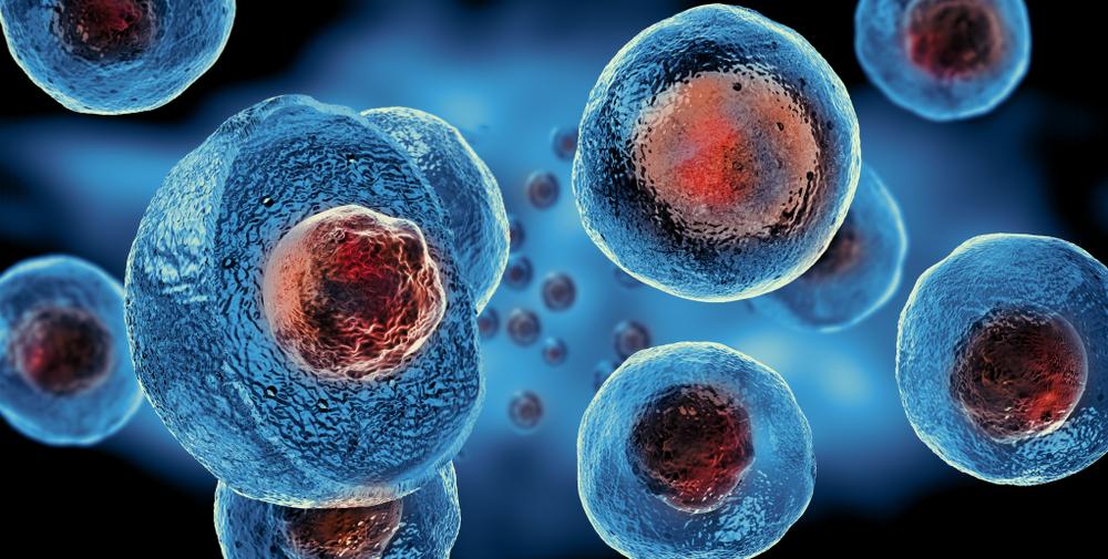 Imagen células madre